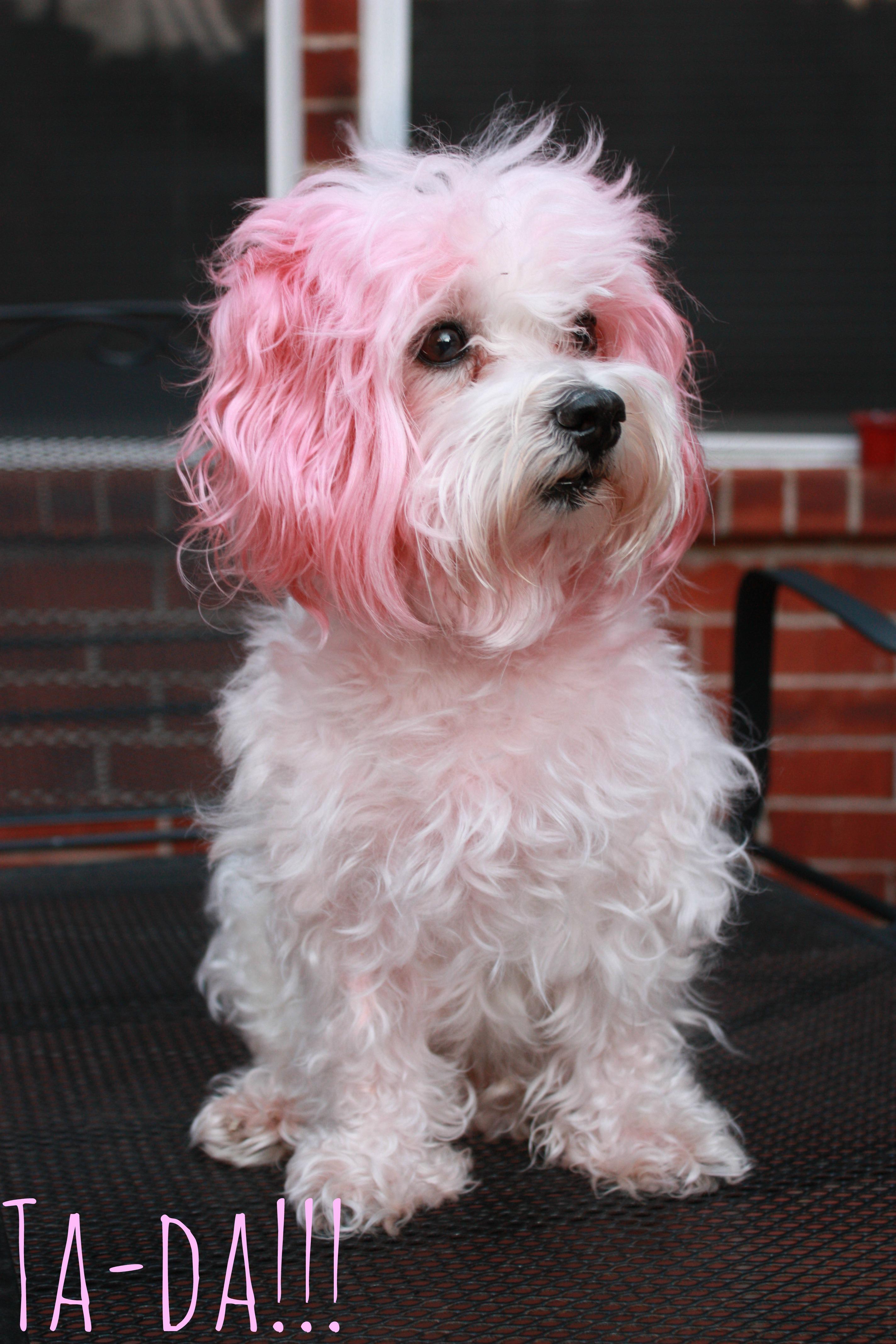 dog hair dye | Sarah Forshaw\'s Blog