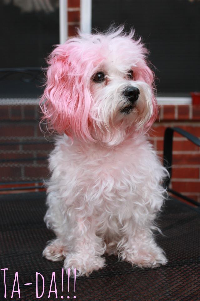 Kool Aid Hair Dye Diy Sarah Forshaw S Blog